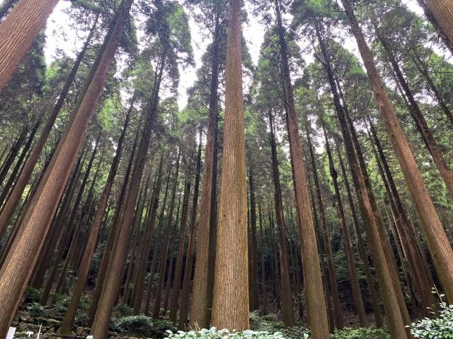 wood-img7